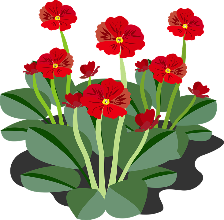 clip art flor flora free vector graphic on pixabay