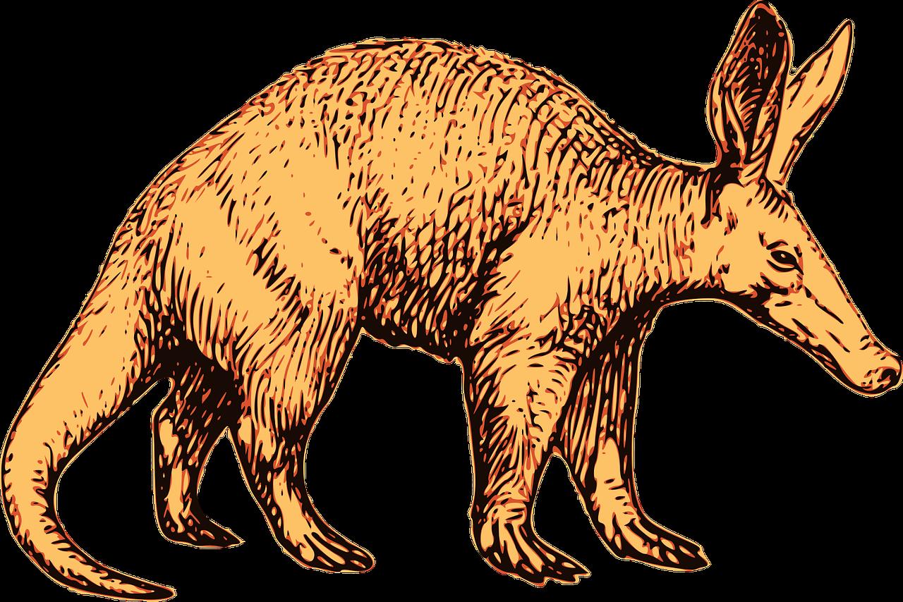 Drawing of an Aardvark