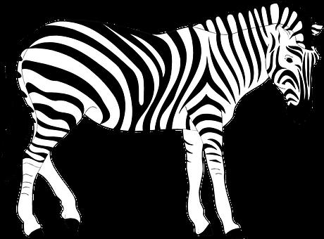Africa animal striped stripes wild zebra z