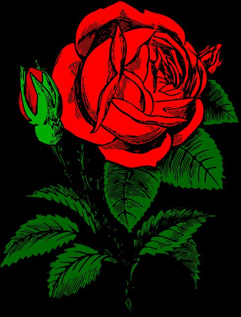 RoseFlowerRedC2B7FreeVectorGraphicOnPixabay