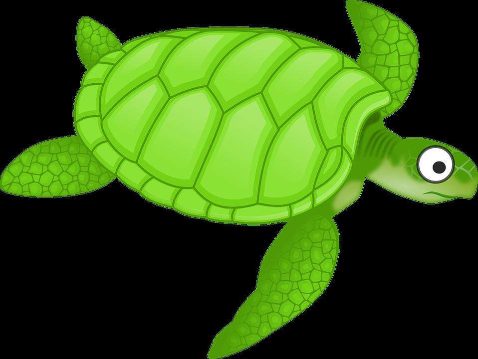 Dibujos Animados De Color Verde: Dibujos Animados Verde Mar · Gráficos Vectoriales Gratis