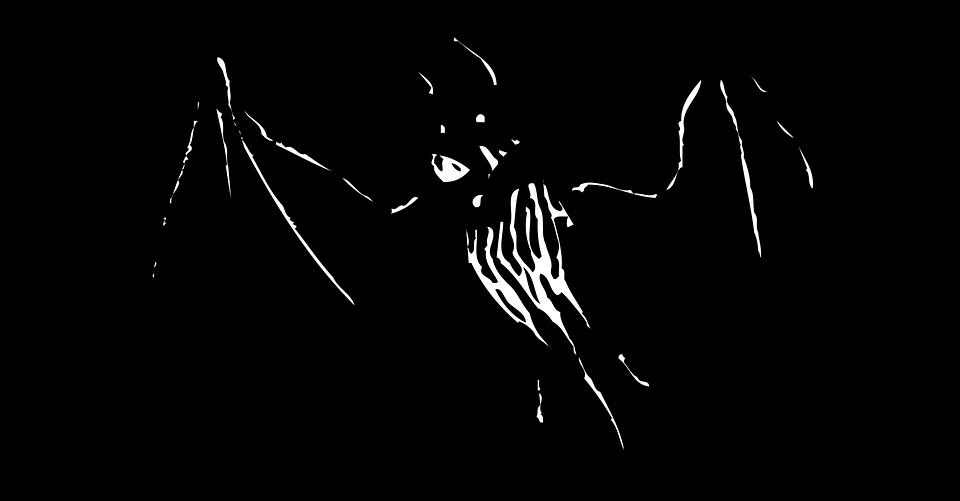 bat animal wildlife  u00b7 free vector graphic on pixabay
