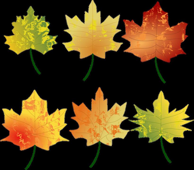 Herbst Farben Blatt · Kostenlose Vektorgrafik auf Pixabay