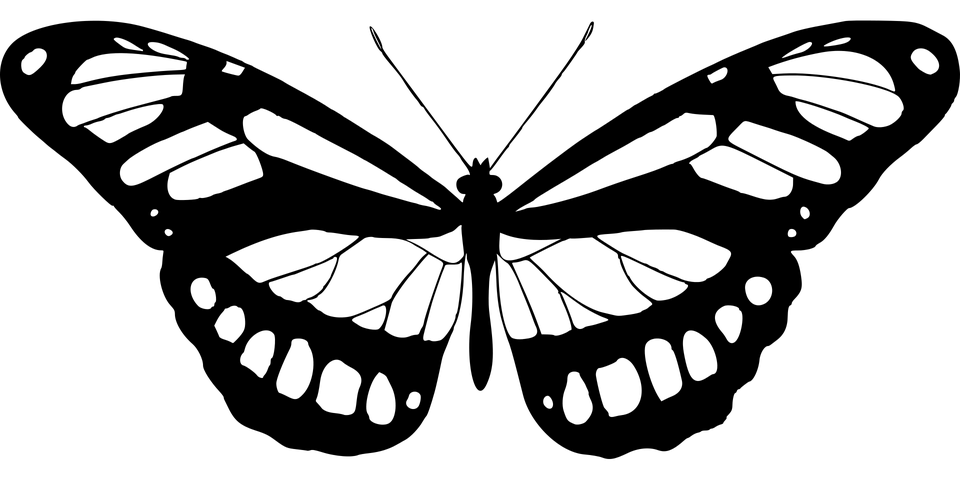 Célèbre Image vectorielle gratuite: Des Animaux, Papillons, Papillon  EG41
