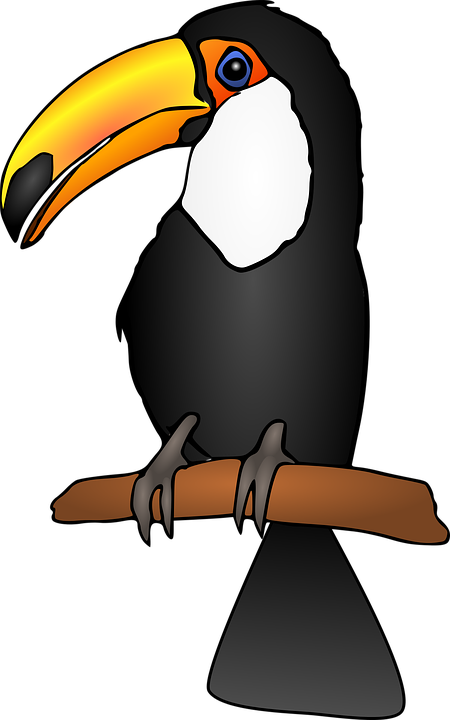Cartoon toucan pixshark images galleries with