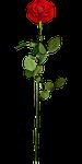floral, flower, leaf