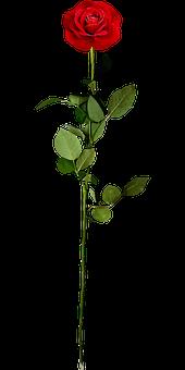 Blumen, Blume, Blatt, Grünen, Blätter