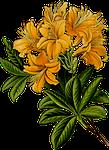 branch, floral, flower