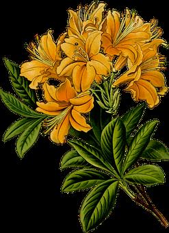 Zweig, Blumen, Blume, Kräuter, Blatt