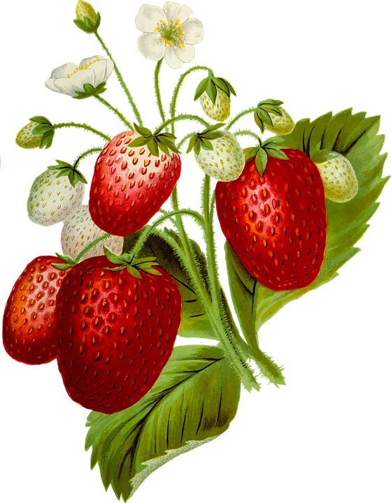 Strawberry Fruit On Leaf | Collection 8+ Wallpapers