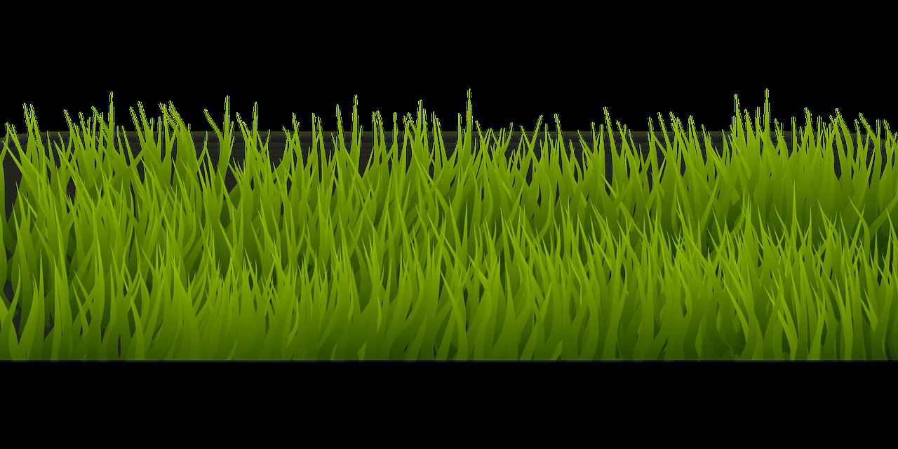 Зеленая трава картинки на белом фоне