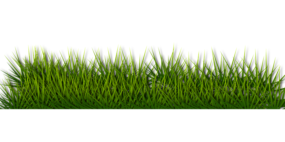 Free vector graphic background border grass green for Best grasses for borders