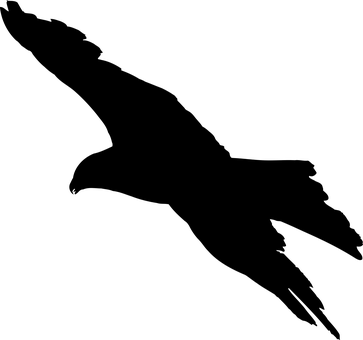 Tier Vogel Adler Favoriten Silhouette Voge