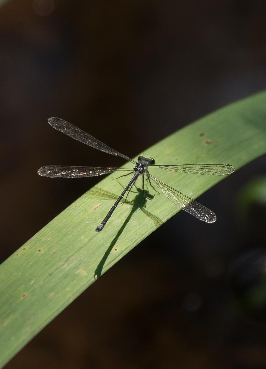 girl-pics-black-winged-dragonfly-girls