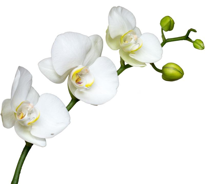 Souvent Orchidée, Blanche - Images gratuites sur Pixabay HT01