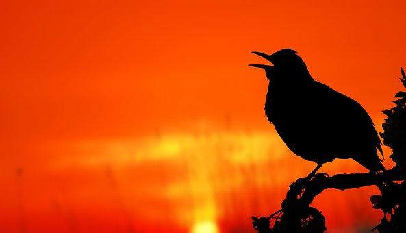 Bird, Sunrise, Silhouette, Tree