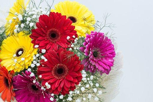 Flowers, Gerbera, Floral, Spring, Bloom