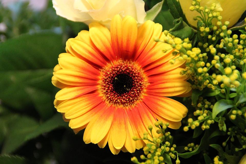 Gerbera orange yellow free photo on pixabay gerbera orange yellow flower blossom bloom mightylinksfo