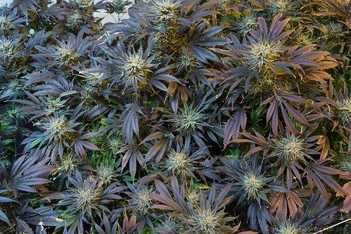 6 Best Methods for Growing Cannabis in 2021 4