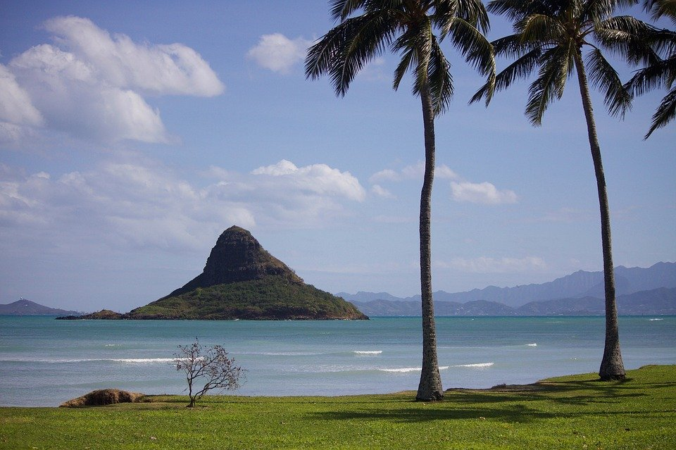 Havaj, Oahu, Beach, Oceán, Moře, Venkovní, Tropický