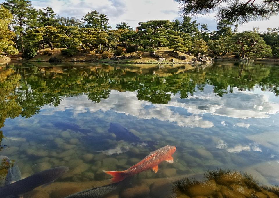 Jepang, Taman, Kolam, Niwa, Koi, Ikan, Merah, Hijau