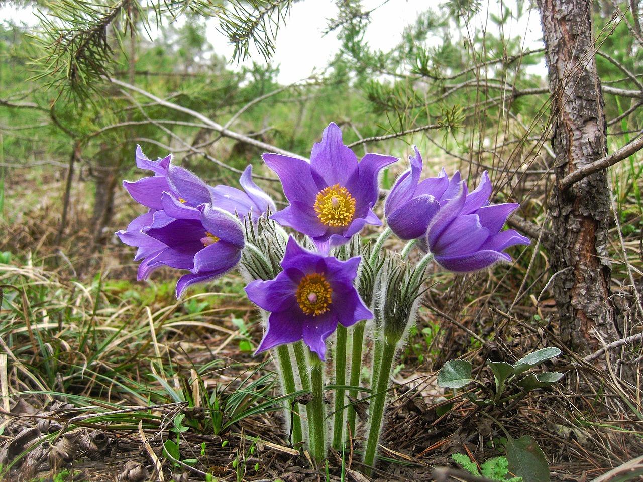 Фото лесных цветов сибири