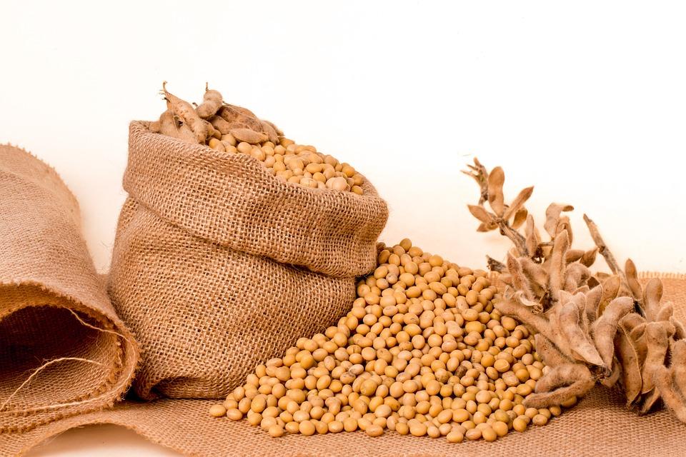 Resultado de imagen de soybeans