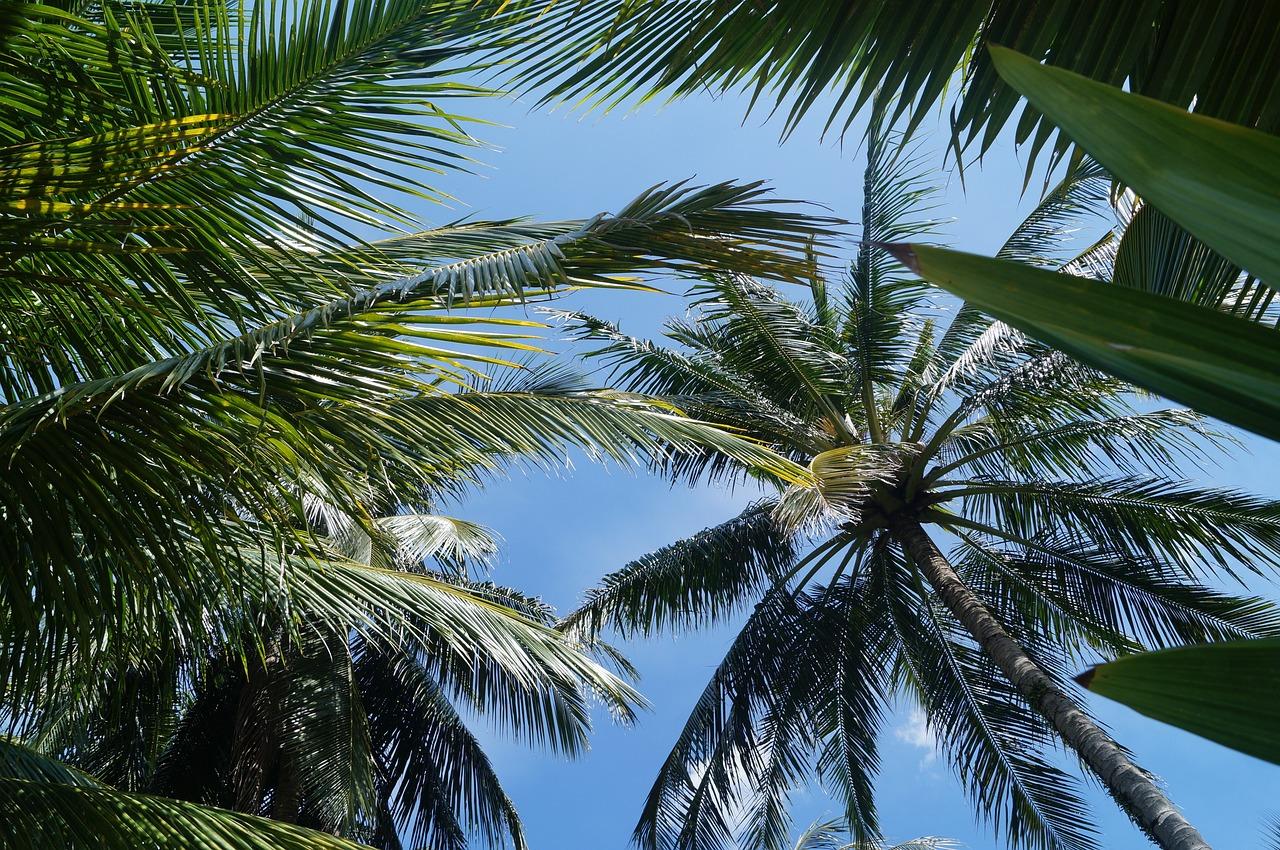 побережье океана смотреть фото пальм тропических выгодной