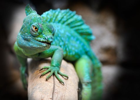 Reptile, Lizard, Green, Exotic, Zoo