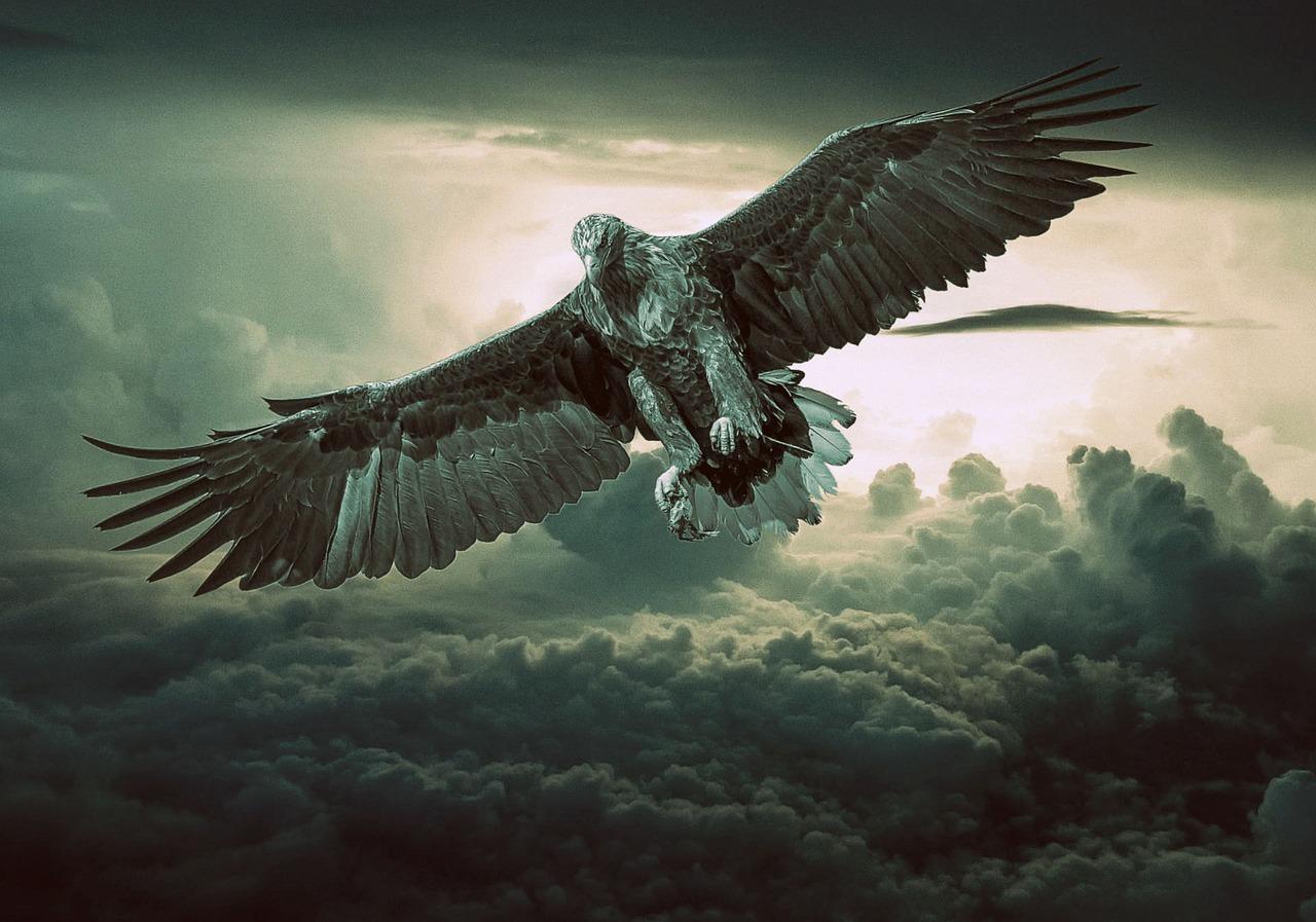 [Bild: eagle-2044134_1280.jpg]