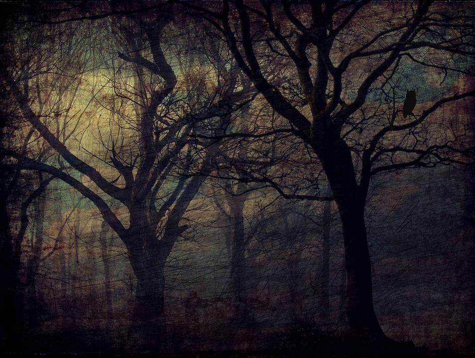 Bosque, Búho, Árboles, Textura, Fondo, Oscuridad