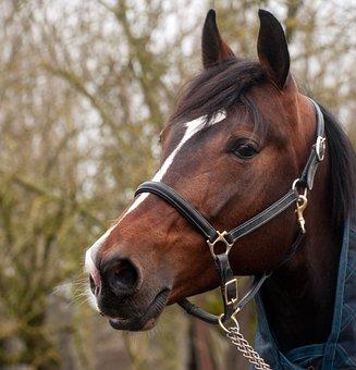 image cheval tete