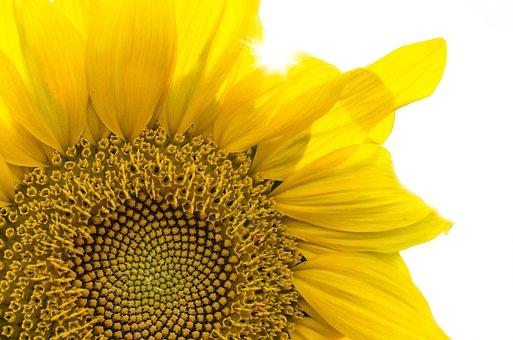 Plant, Nature, Leaf, Flower, Season