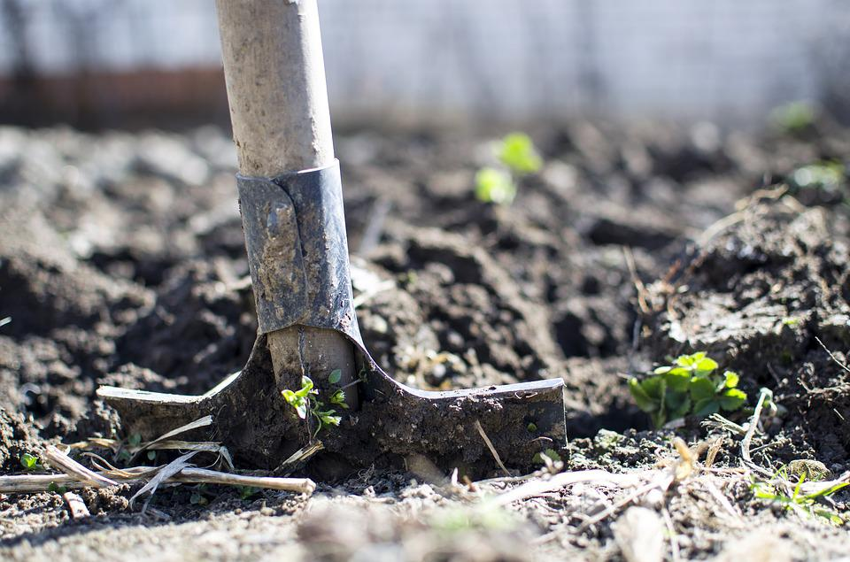 Garden shovel in dirt