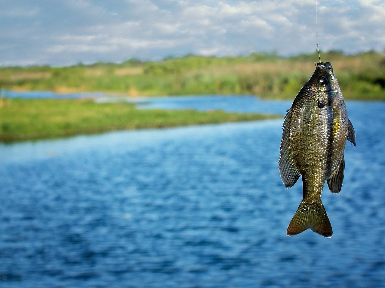 наша рыбалка фото разновид рыб всего сердца