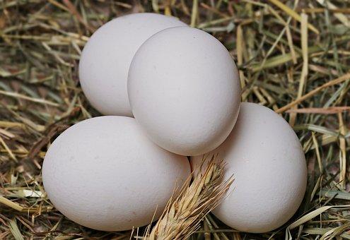 Egg, Straw, Food, Eat, Healthy, Edible
