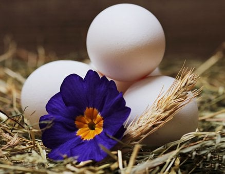 Egg, Straw, Flower, Blossom, Bloom, Food