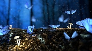 Butterfly, Blue, Forest, Fantasy