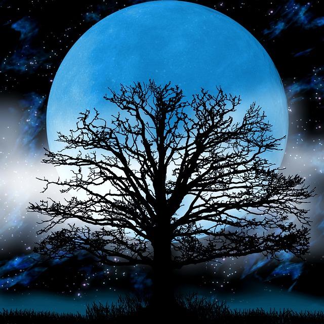 trees night moon blotch - photo #19