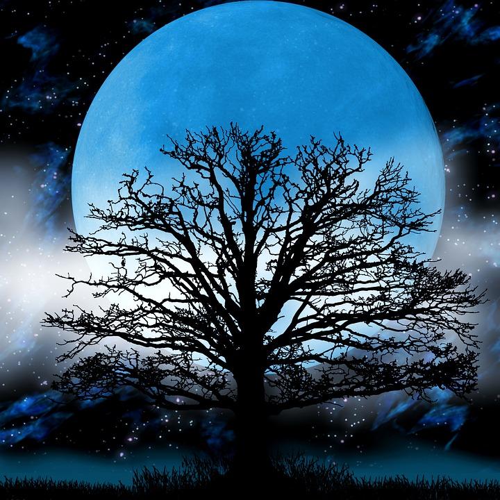 Free Illustration Moon Tree Fog Fantasy Night Free
