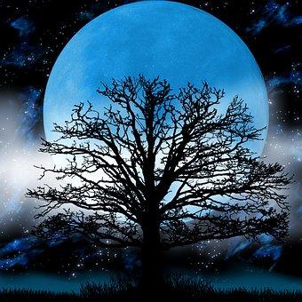 ムーン, 木, 霧, ファンタジー, 夜, 空, 雰囲気, シルエット, 月光