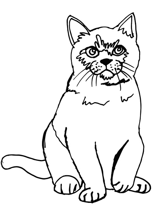 Cat Fluffy Coloring Page Cute Animal Pet