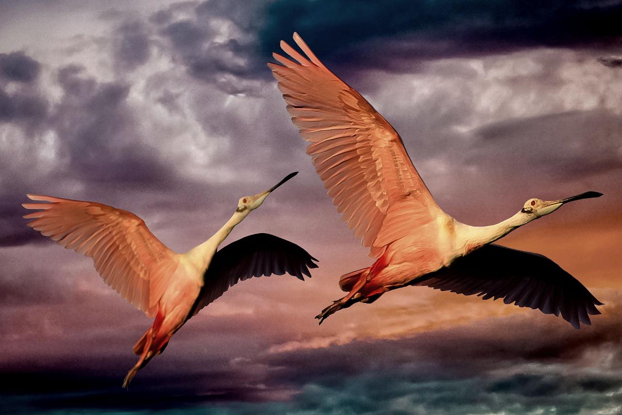 Птица в полете красивые картинки