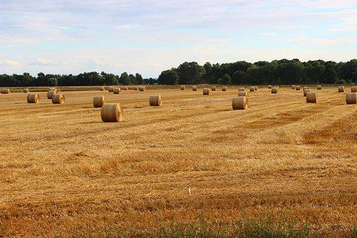 Agriculture, Village, Corn