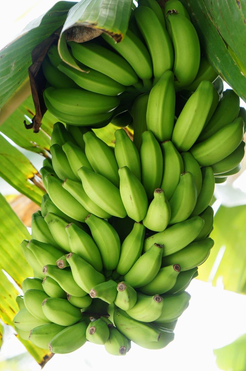 банановый куст картинки решили подготовить