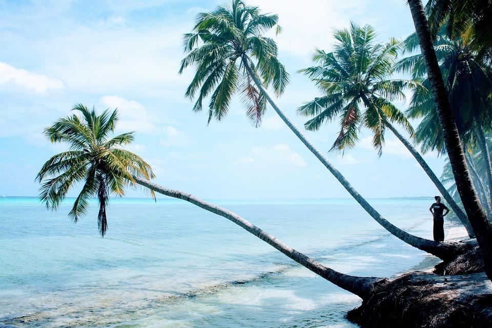trees palm blue - photo #44