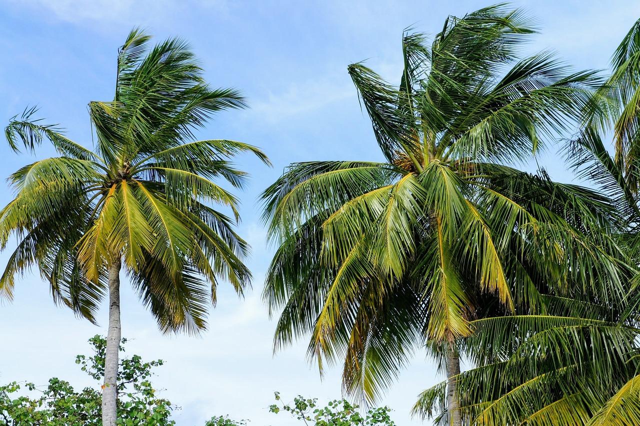 разнообразие пальмовые деревья картинки кладки закупки камня