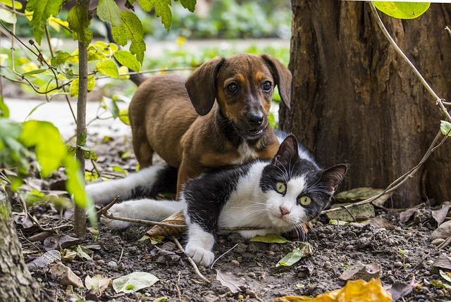 Photo gratuite chien chat chats amiti image gratuite - Image patte de chien gratuite ...