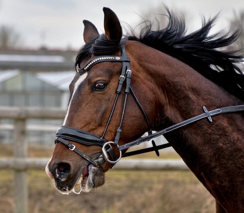 Cheval Tete cheval tête crinière · photo gratuite sur pixabay