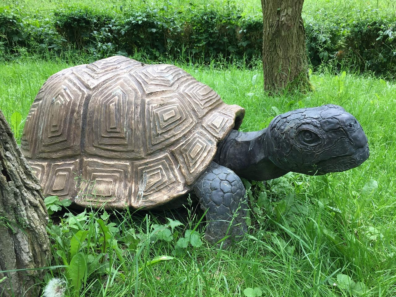 лисичка черепаха рисунок фото группы